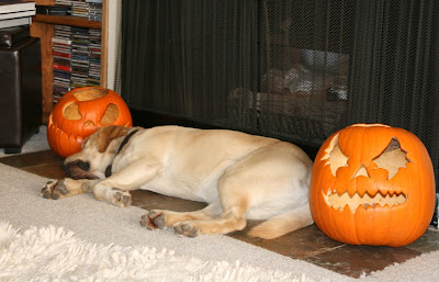 Tired Halloween pup
