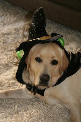 Halloween hat Cooper