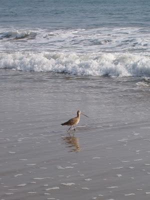 Long beaked bird