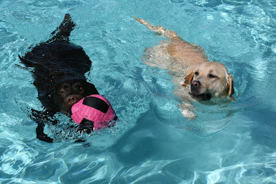 Pool pups Woody and Cooper