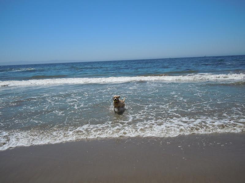 Hendry's Beach surf Labrador
