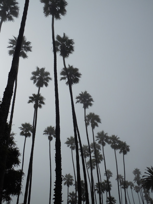 Foggy Santa Monica