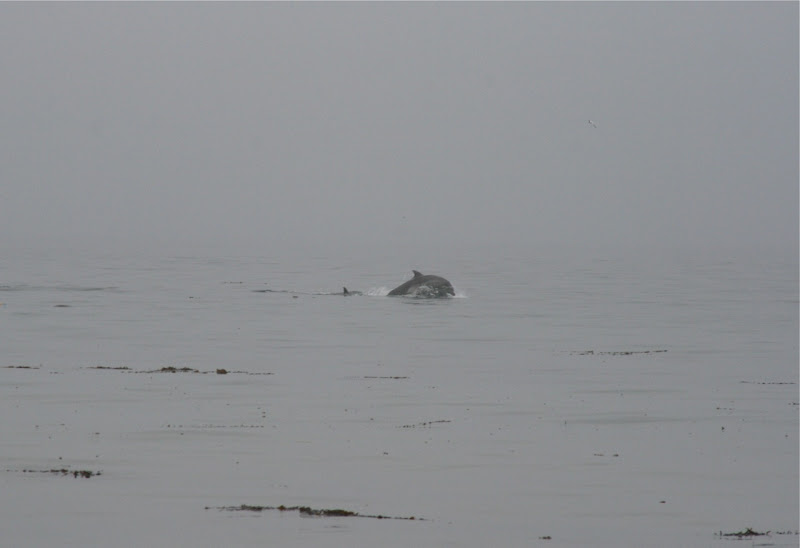 Dolphins at Hendry's Beach