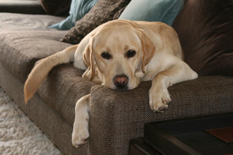 Sofa Cooper Jan 2010