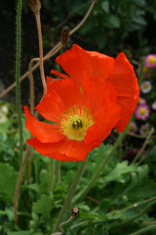 Huntington Gardens flower