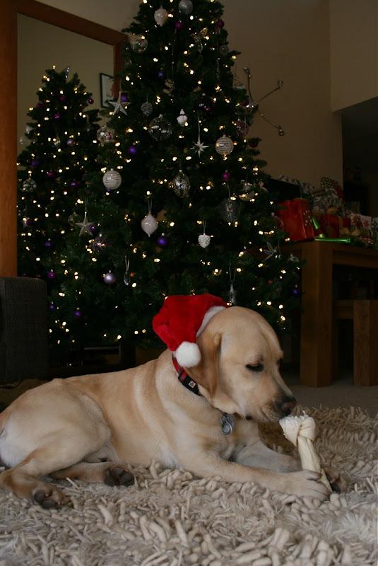 Christmas Tree Cooper