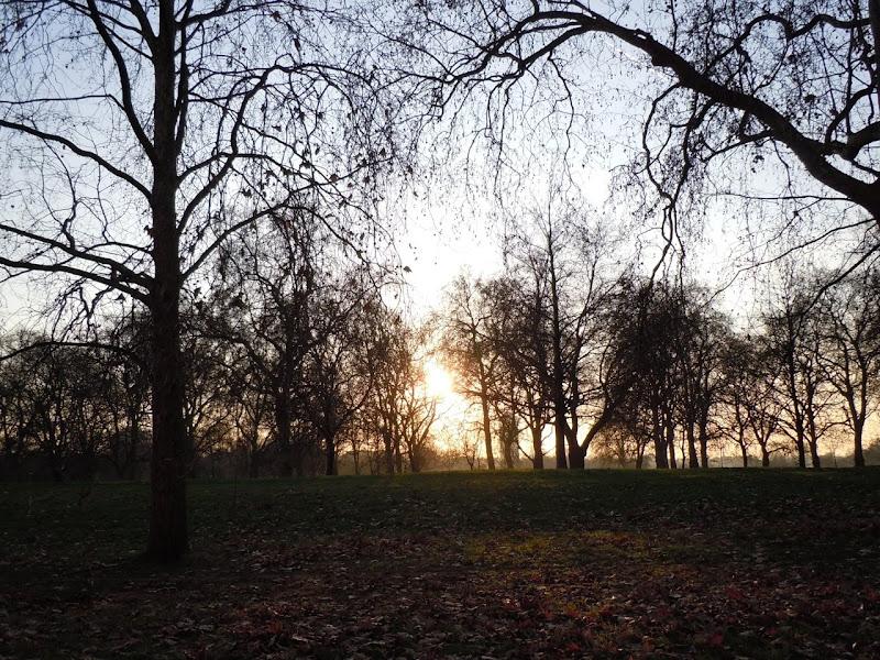 Winter Sun Hyde Park