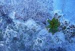 bajo el hielo ...el verde duerme