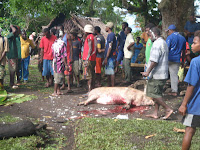 Woman Killing Pig