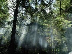 Florestas e Matas Virgens