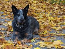 Hawky-dog