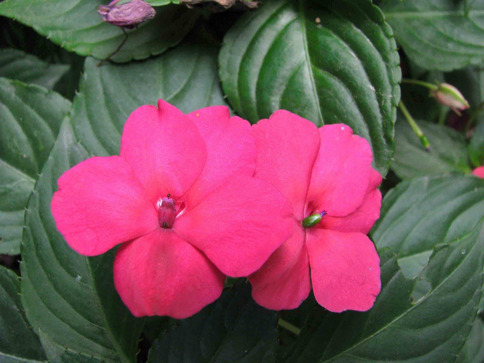 Ecuador personajes y especies Galpagos y Continente Plantas