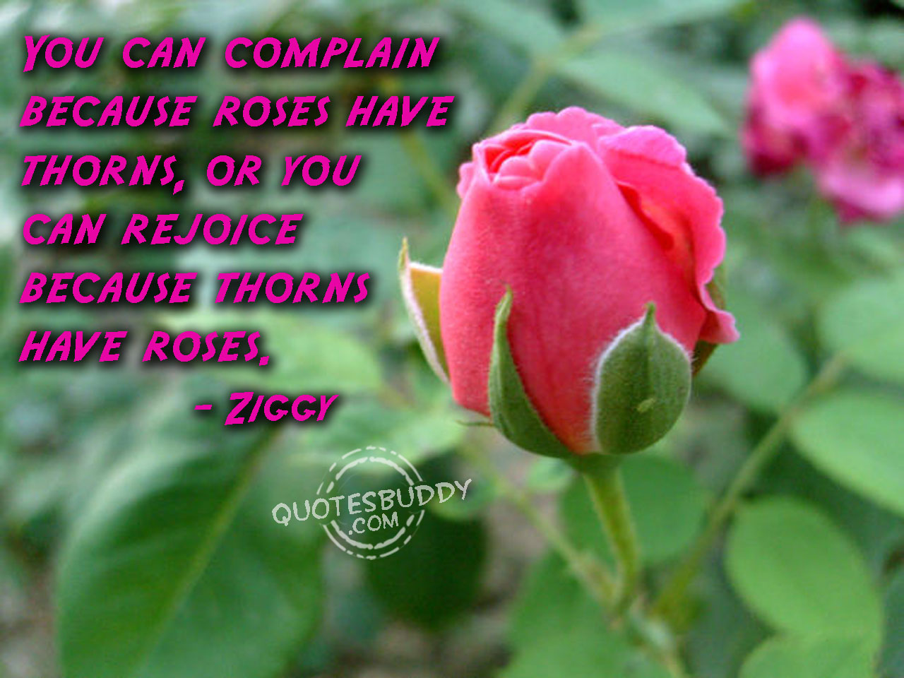 Rose pictures with quotes 24 rose pictures with quotes dhlflorist Images
