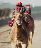 robots-jockeys Dubai