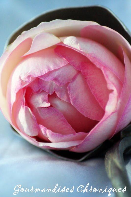 Fleurs cristallis es ou comme des envies de prolonger l t for Commandes fleurs