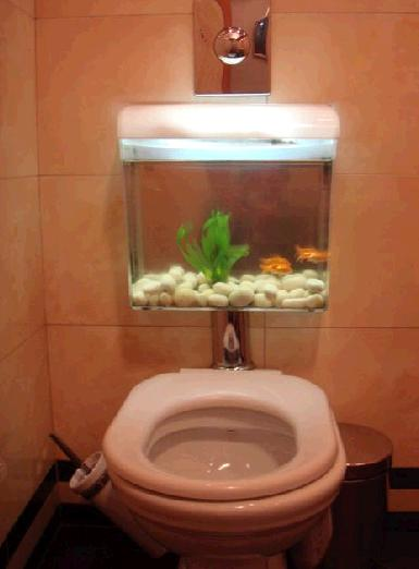 Toilet Bow fish Tank