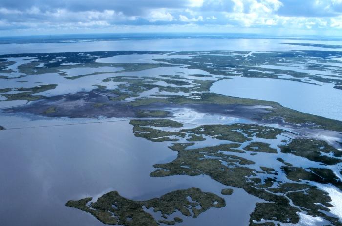 Louisiana's Wetlands: A Lesson in Nature Appreciation