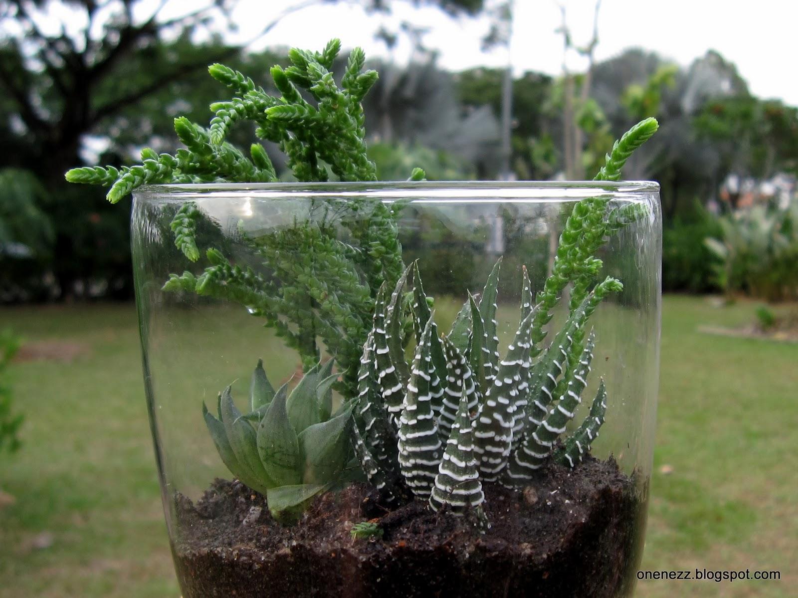 Onenezz Terrarium or Dish Garden