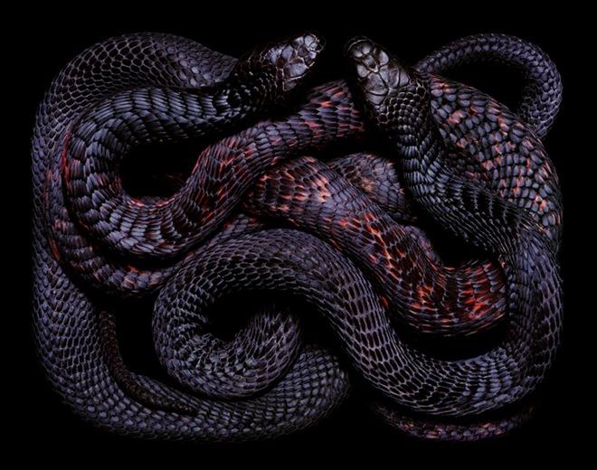Snake Venom Safe To Drink