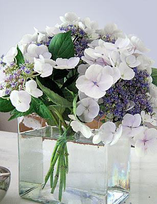 hydrangeas in a glass vase