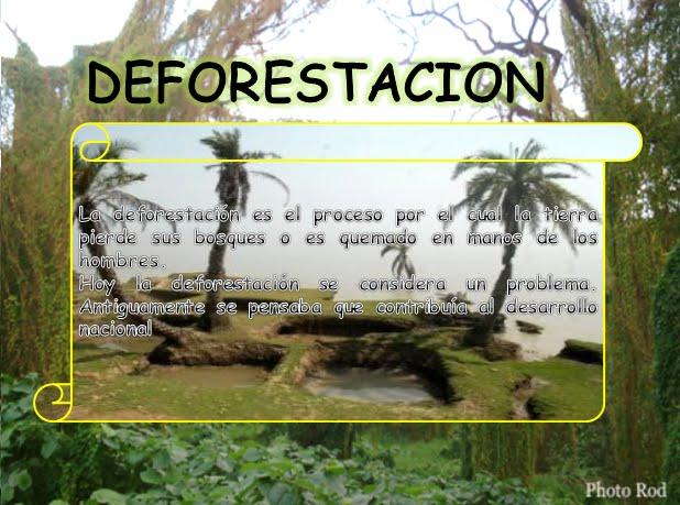 """La Deforestación: """"Tomemos conciencia """""""