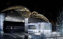 Le Museum de Toulouse