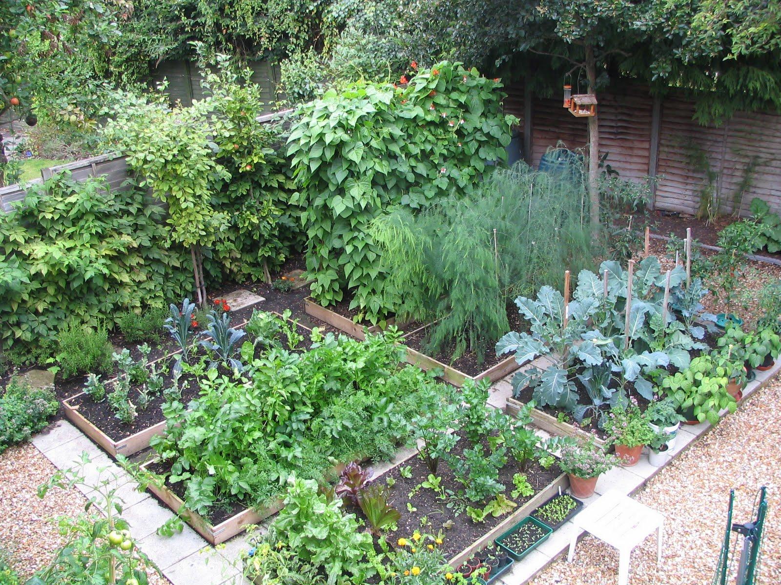 Mark 39 s veg plot my plot for Vegetable garden plot ideas
