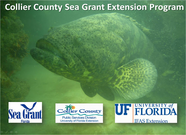 Stay In Touch With Collier County's Sea Grant Extension Program