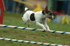 Stewie jumping