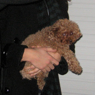 Blake Lively  on Img 3092 Blake Livelys Dog Mkmetz Jpg