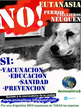 Marcha para decir no a la eutanasia