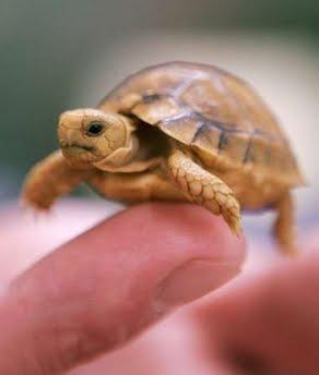 Pet Turtle Care: 2010-05-02PET TURTLE CARE