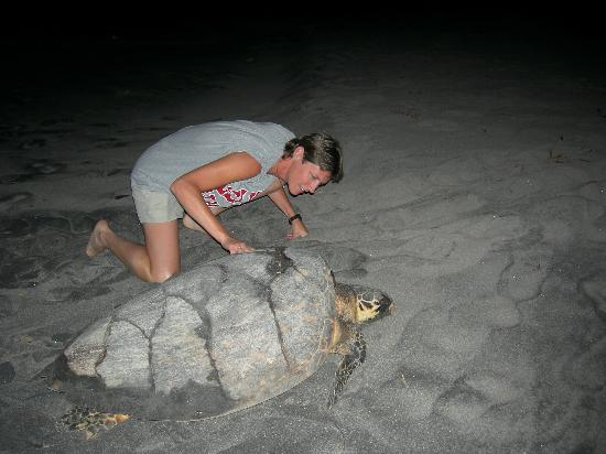 pet turtle care vacations that make a difference   save