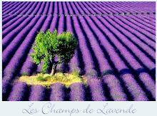 fields of lavender~2