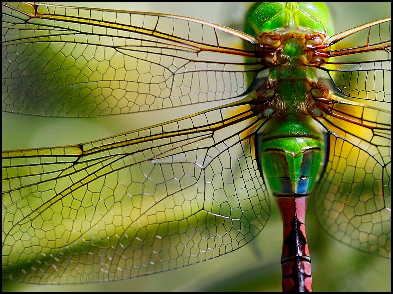 Katie Barnes Photography Most Colorful Dragonfly