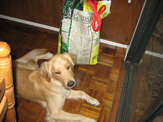 Dog food and an old wood floor