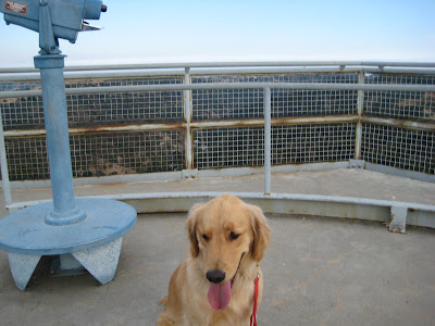 Golden Retriever atop the NIKE missile station