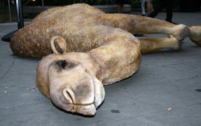 Camelot-Camel-Carcass