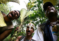 La recolección del cogollo de la palma real se hace con apego a la normativa conservacionista