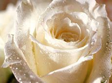 Felicitaciones a las Madres en su día, este domingo y todos los dias del año.