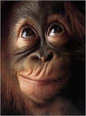 No hay muestras de que los primates puedan fingir la risa y manipularla a su antojo
