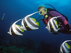 ¿Te gustaria nadar entre peces tropicales y delfines?