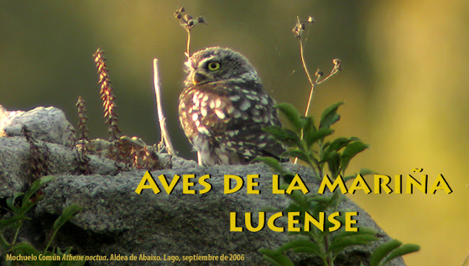 Aves de la Mariña Lucense