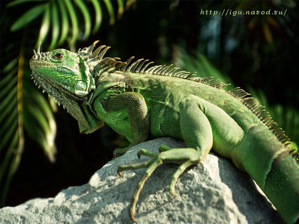 imagenes de animales con escamas - Dibujos en la naturaleza: Animales National Geographic
