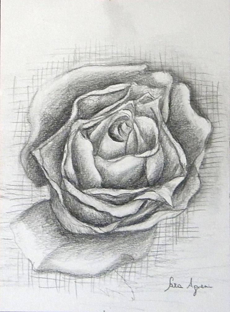 Dipinti disegni copie e rivisitazioni matita su carta for Cavallo disegno a matita