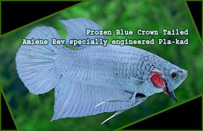 Duke Amiene Rev: Amiene Rev's Genetic Engineered Fish - Titanium