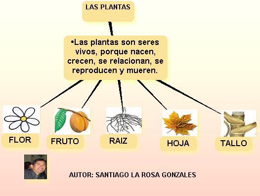 Las plantas la planta for Como se llaman las plantas ornamentales