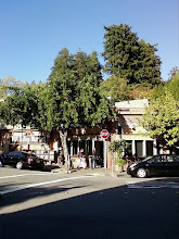 The Mill Valley Market