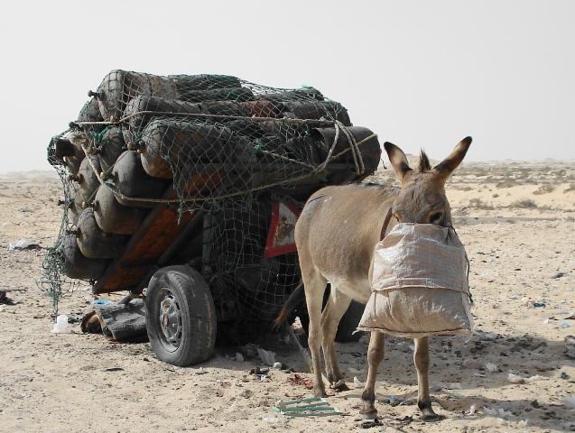 Transporte de mercancías peligrosas - Mauritania