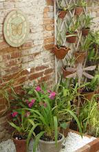 Alameda das Orquideas